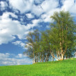 Nice clump of trees, empty background landscape — Stock Photo #2135289