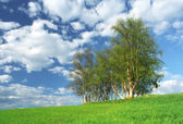 Nice clump of trees, empty background landscape — Stock Photo
