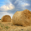 Sheaves of hay — Stock Photo