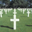Stock Photo: Normady Americcemetery