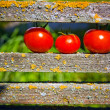 Three ripe tomatoes — Stock Photo