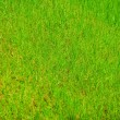 Perfect fresh green grass — Photo