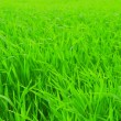 Perfect fresh green grass — Stockfoto