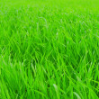 Royalty-Free Stock Photo: Fresh green grass