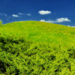 Green hill, blue summer sky — Stock Photo