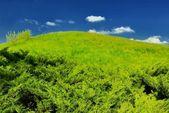 Green hill, blue summer sky — Stock Photo