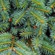 Close up of fir tree — Foto de stock #2348680