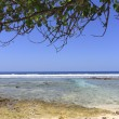 Tropical beach — Stock Photo #2147680