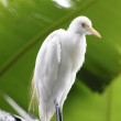 Egret — Stock Photo #2179532
