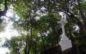 在森林里独行跨 — 图库照片
