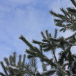 Branches against the sky in the winter — Stock Photo #2153279