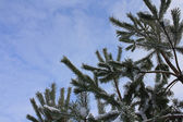 Branches against the sky in the winter — Stock Photo