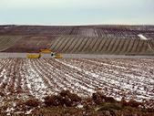 Crane in a field by winter — Stock Photo