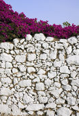 Stone wall and bougainvillea — Stock Photo