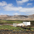 Stock Photo: Cactus farm in Lanzarote