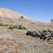 Arid landscape in Lanzarote — Stock Photo