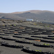 Vineyard in Lanzarote — Stock Photo