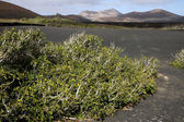 Volcanic land in Lanzarote — Stock Photo