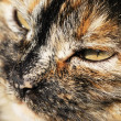Stock Photo: Portrait of cat