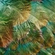 Stock Photo: Texture of color feather
