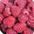 Many raspberrys — Stock Photo