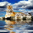 Stock Photo: Tiger in sky