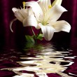Stock Photo: White lily reflected in water