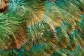 Texture of color feather — Stock Photo