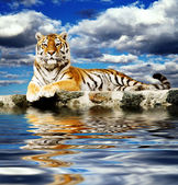 Tiger in the sky — Stock Photo