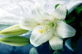 White lily on the mirror — Stock Photo