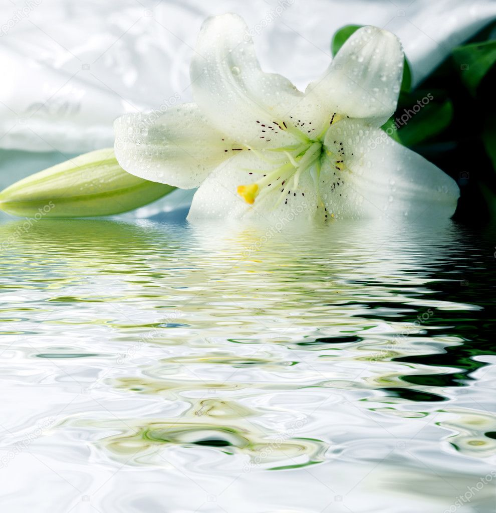 White lily reflected in the water — Stock Photo #2157742