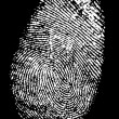 Stock Vector: Fingerprint on black