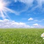 Bright Beautiful Daisy and Grass Field — Stock Photo