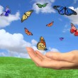 Pretty Butterflies Flying Free - Stock Photo