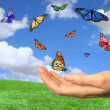 Stock Photo: Pretty Butterflies Flying Free