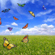 Stock Photo: Beautiful Butterflies Flying Free in an