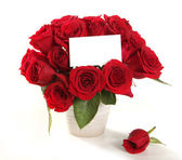 Roses in a Pot With Blank Message Sign f — Stock Photo