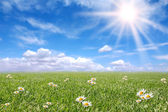 Serene Sunny Field Meadow in Spring — Stock Photo