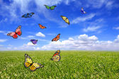 Beautiful Butterflies Flying Free in an — Stock Photo