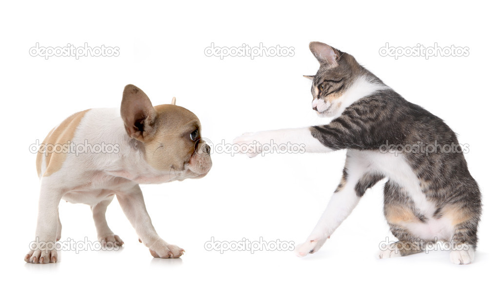 Playful Puppy Dog and Kitten on White Background — Stock Photo #2160452
