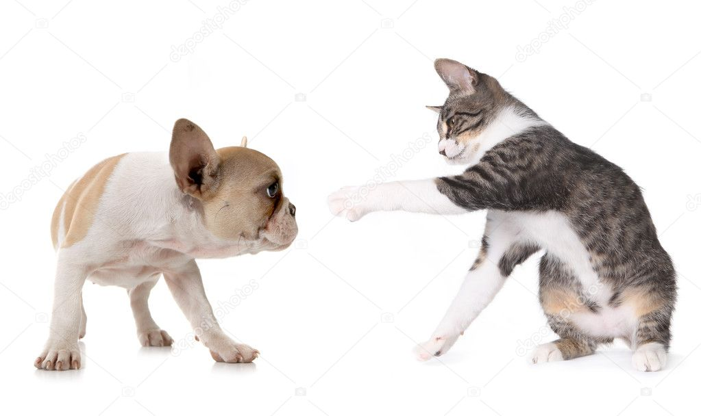 Playful Puppy Dog and Kitten on White Background   #2160452