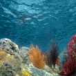 Stock Photo: Underwater View of the Ocean With Plants