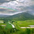Stock Photo: Panoramof Taro Fields in Kauai Haw