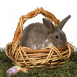 Cute Grey Rabbit in a Wicker Basket - Stock Photo
