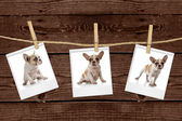 Pictures Hanging on a Rope of an Adorabl — Stock Photo