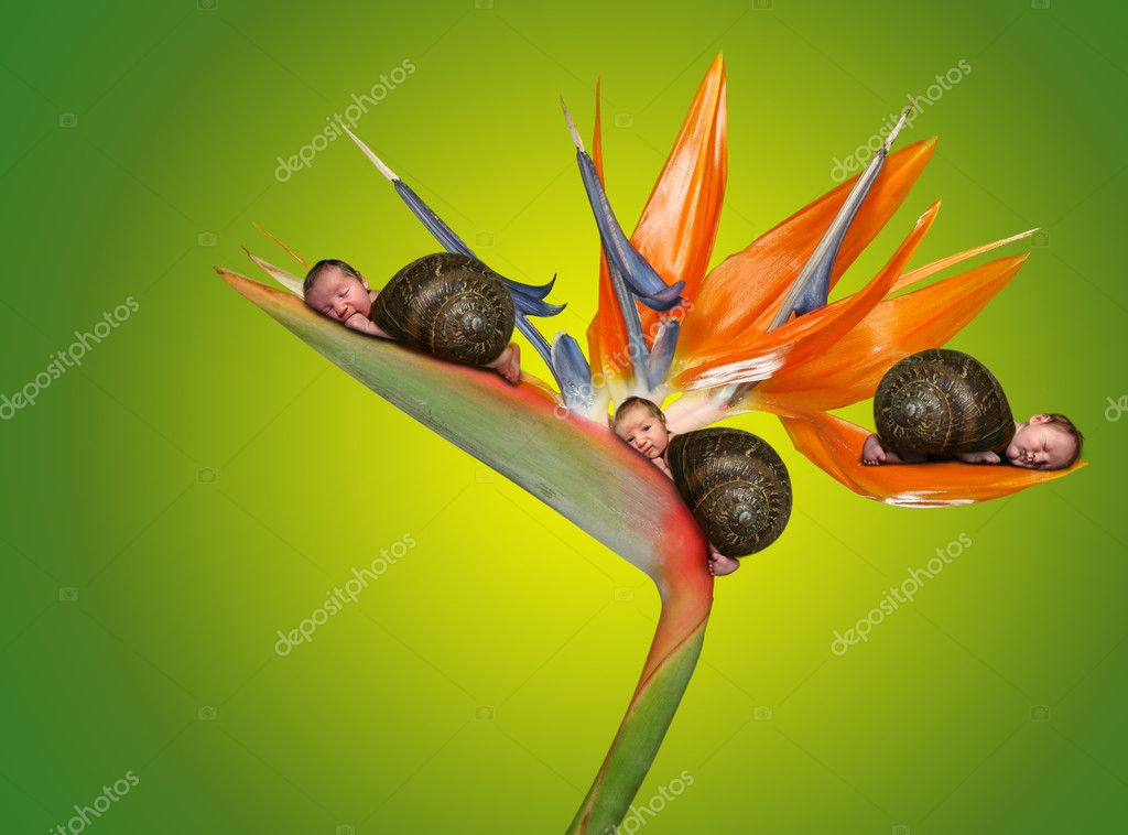 Three Little Babies Lying on a Flower. Surreal Fantasy Portrait Image  Stock fotografie #2203967