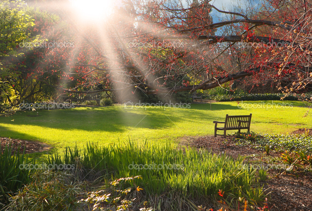 Bench in the park at Sunset With Bright Sunlight — Stock Photo #2204755