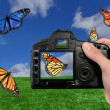 Photographer Shooting Butterflies in the — Stock Photo