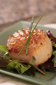 Scallop on a Green Plate Dressed With Ch — Stock Photo