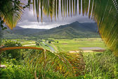 Taro Fields in Kauai — Stock Photo